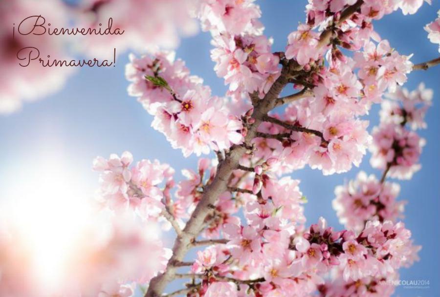 10 ideas para decir fuerte, Hola Primavera.