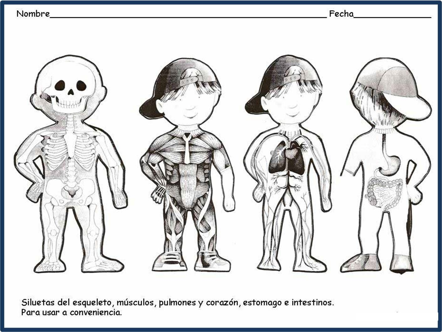 Excelente Los órganos Internos Del Cuerpo Modelo - Anatomía de Las ...