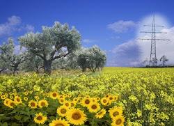 biomasse fordeler og ulemper