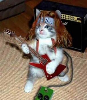 ¡Gato rockero!