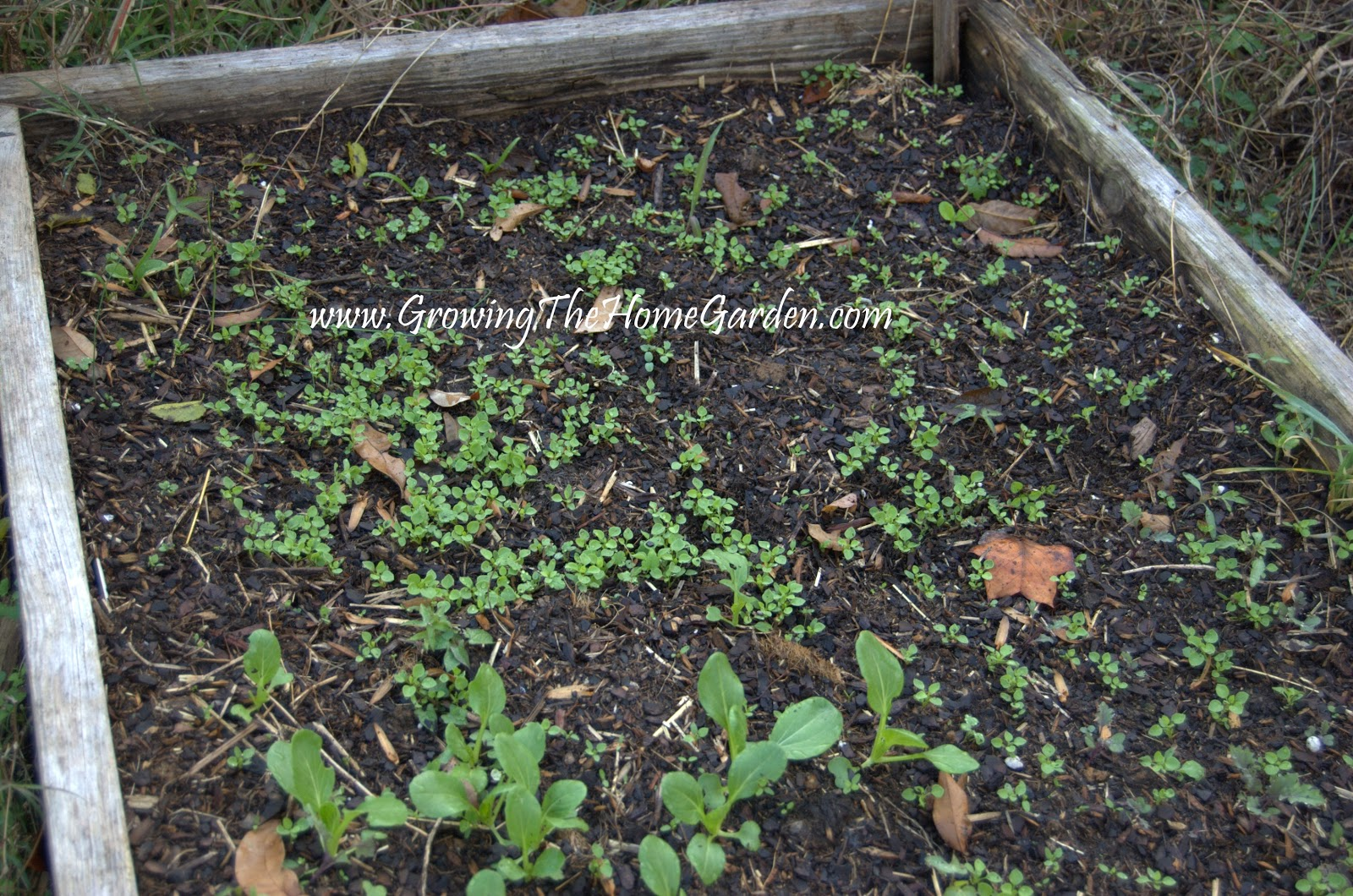 Fall Vegetable Garden Ideas Part - 29: Growing In The Fall Vegetable Garden