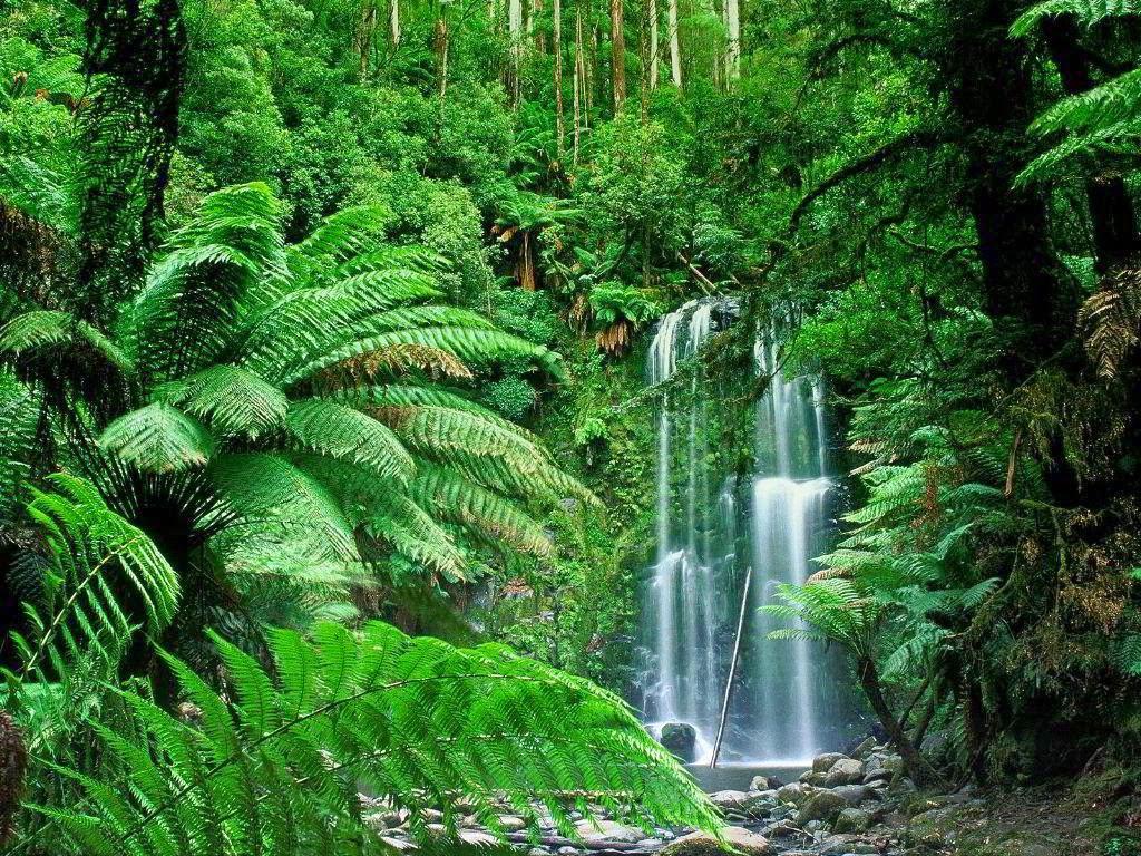 imagenes de animales del bosque tropical - Animales y Animales » Lista de animales de la selva