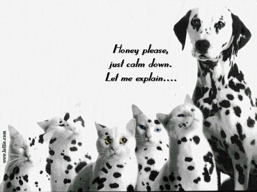 Dalmatian Dog with Cats