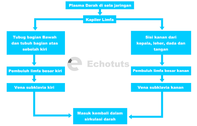 Skema peredaran limfa - echotuts