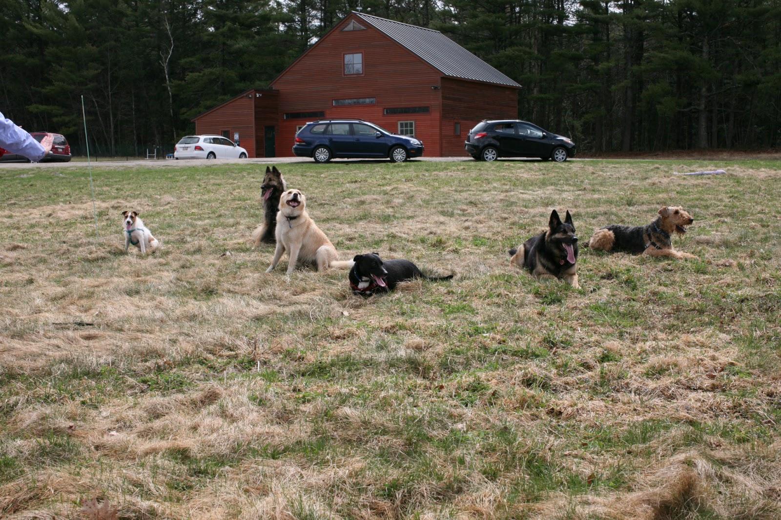 Dominence Dog Training Portland