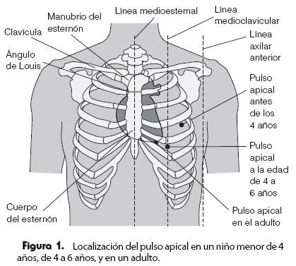 CARDIOLOGIA: area precordial
