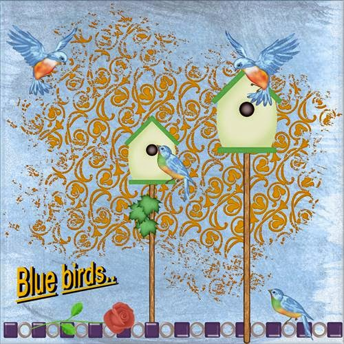 page 4 - May 2015 , Blue birds .