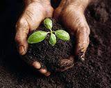 Sementes de quintais - Plante o seu Quintal e ofereça a uma criança...