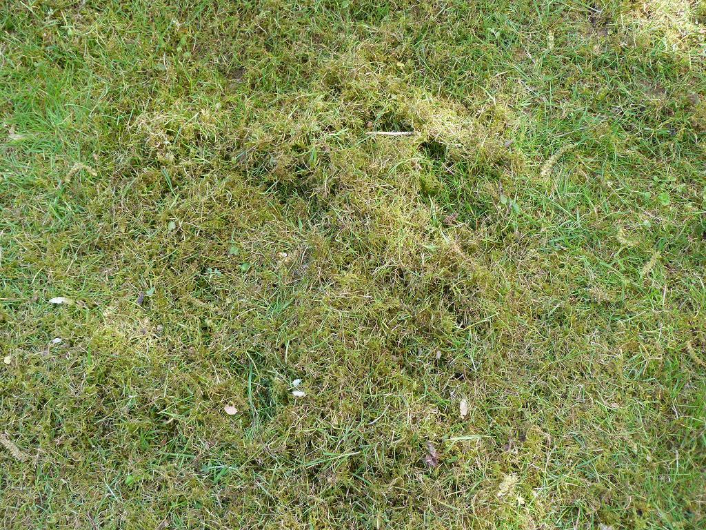 Les pins noirs scarification de la pelouse - Scarificateur pour pelouse ...