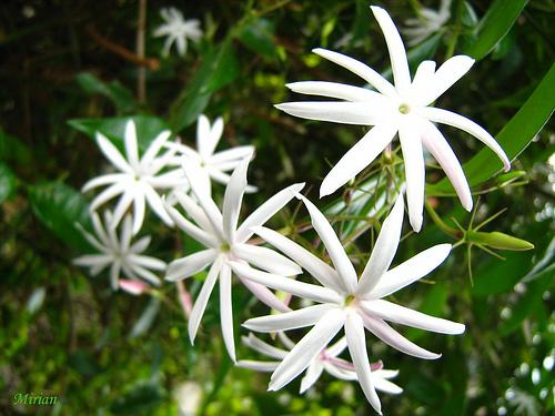 ღஜ♥RITA MORÁS♥ஜღ  Flores que se Destacam na Primavera
