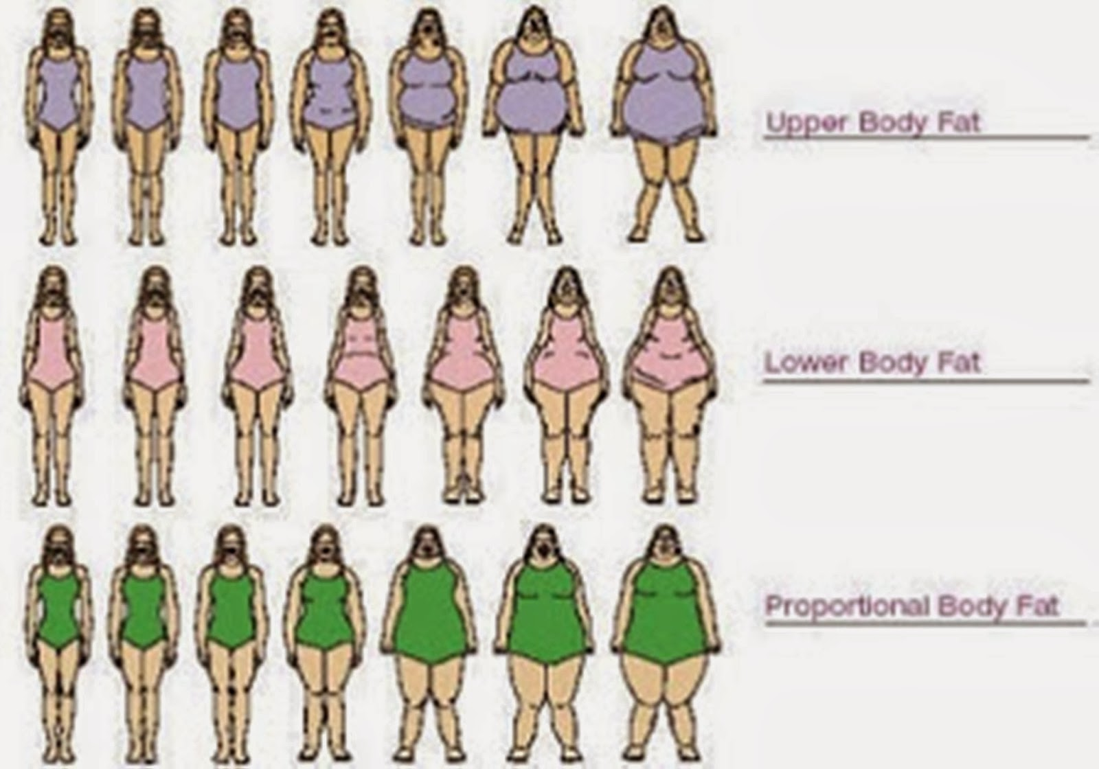 Female body chart