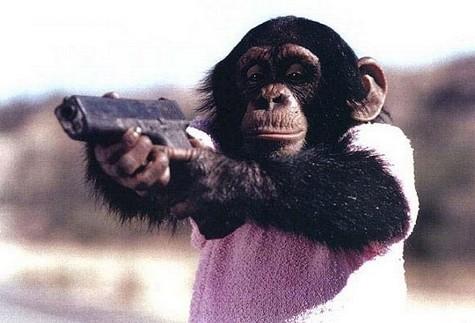 Monkey Holding Gun