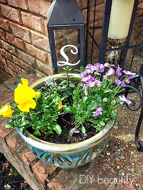 Planting flowers and herbs www.diybeautify.com