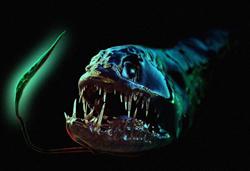 Dragon Fish - Hewan Teraneh