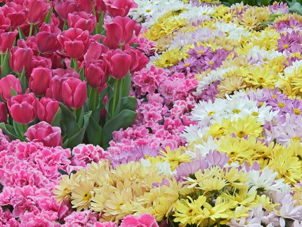 Raznoliko proljetno cvijeće - download besplatna pozadina za desktop biljke, ...