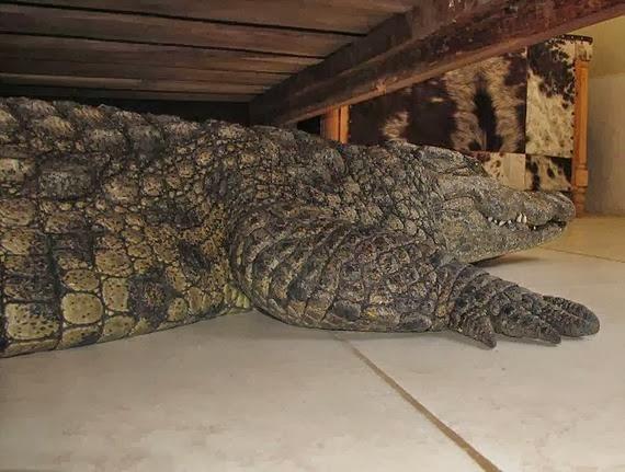 super stærk krokodille