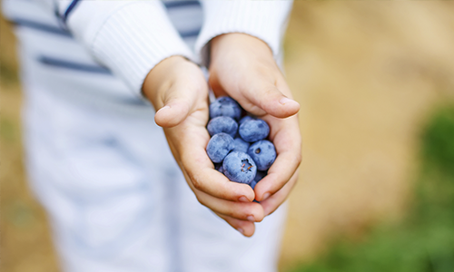 Child's hands holding blueberries after parent made teaching children about health a priority.