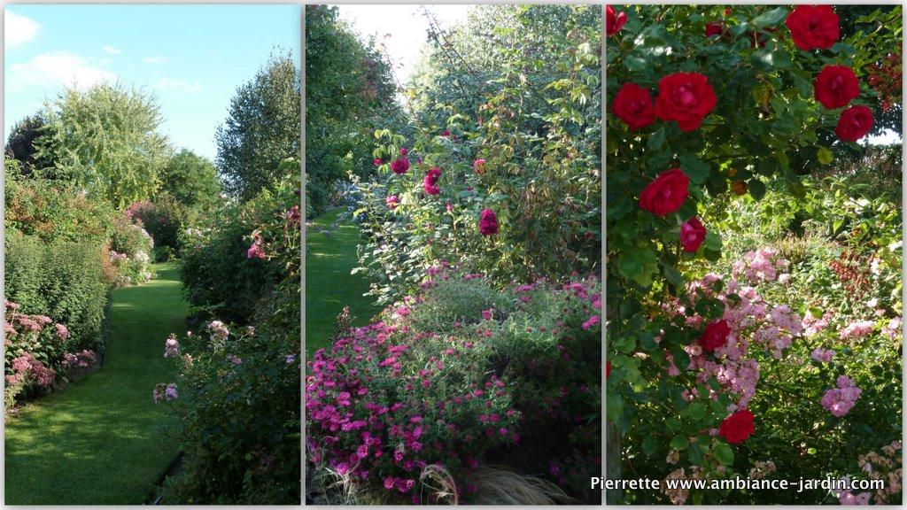 ambiance jardin les roses andr eve le jardin de morailles. Black Bedroom Furniture Sets. Home Design Ideas