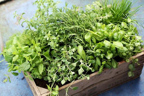 The Herb Gardener The 10 Best Fragrant Herbs for Your Garden