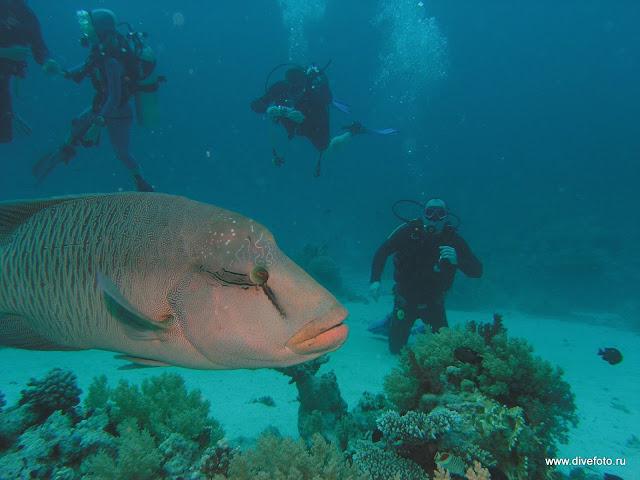 фотграфия люди на фоне рыбы наполеон