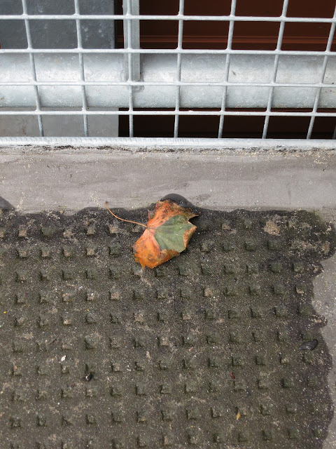 Autumn leaf by heavy mesh barrier at edge of car-park on supermarket roof.