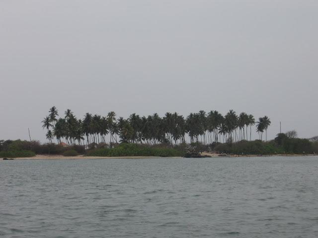 Coconut palms, St.Mary's Island