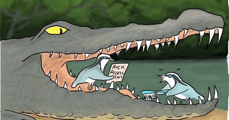 Egyptian plover bird and crocodile - photo#15