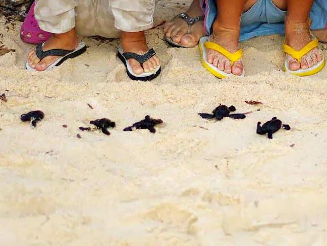 baby sea turtles on beach, children