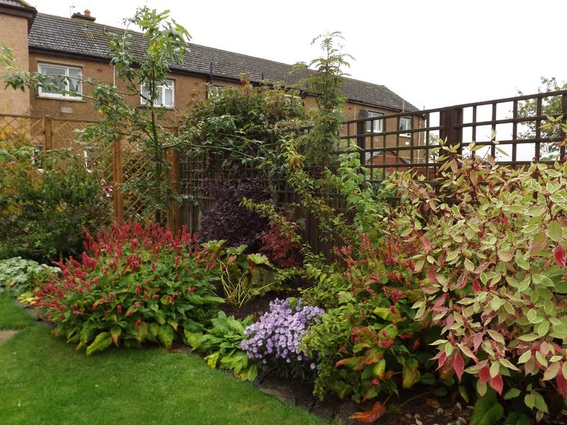 Angie 39 s garden diaries tree following october 2015 sorbus autumn spire - Gardening in october a brief to do list ...
