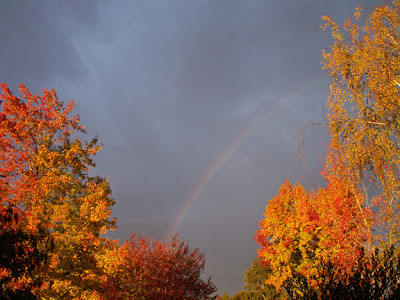 fall trees stormy sky with rainbow nature photograph by Jennifer Kistler copyright 2012