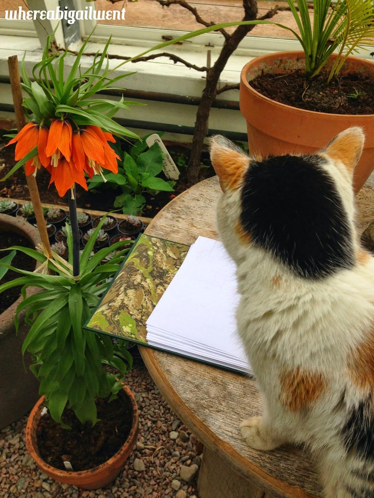 Connemara Kylemore Abbey Cat
