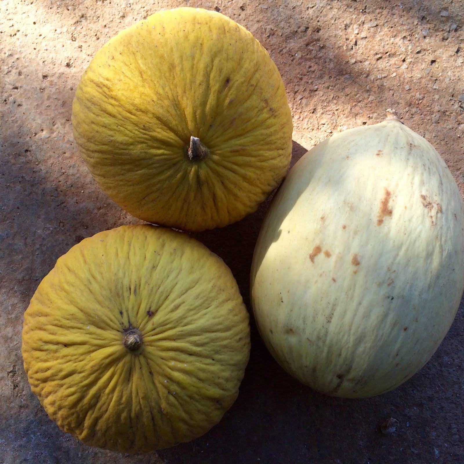 melons menorquins