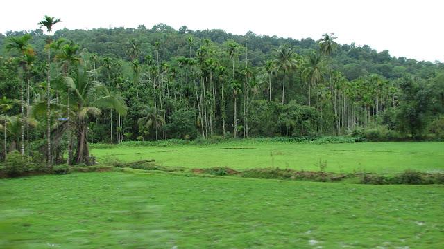 Crossing Agumbe