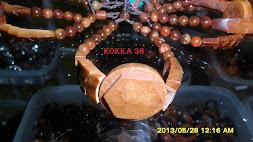 KOKKA 36