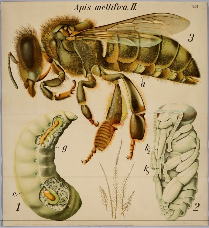 Insect Anatomy | Travel Boy