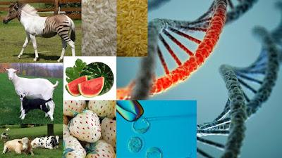 manfaat mempelajari ilmu biologi dalam berbagai bidang