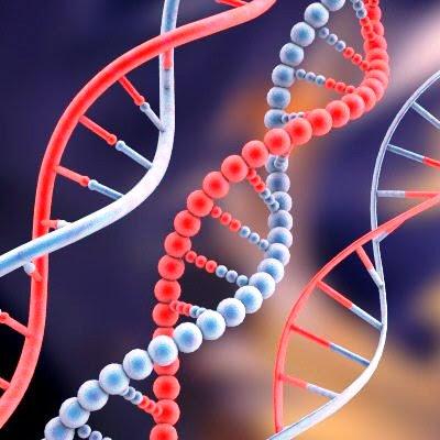 DNA exemplo de herança