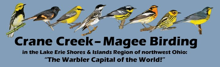 Birding the Crane Creek - Magee Region of Northwest Ohio