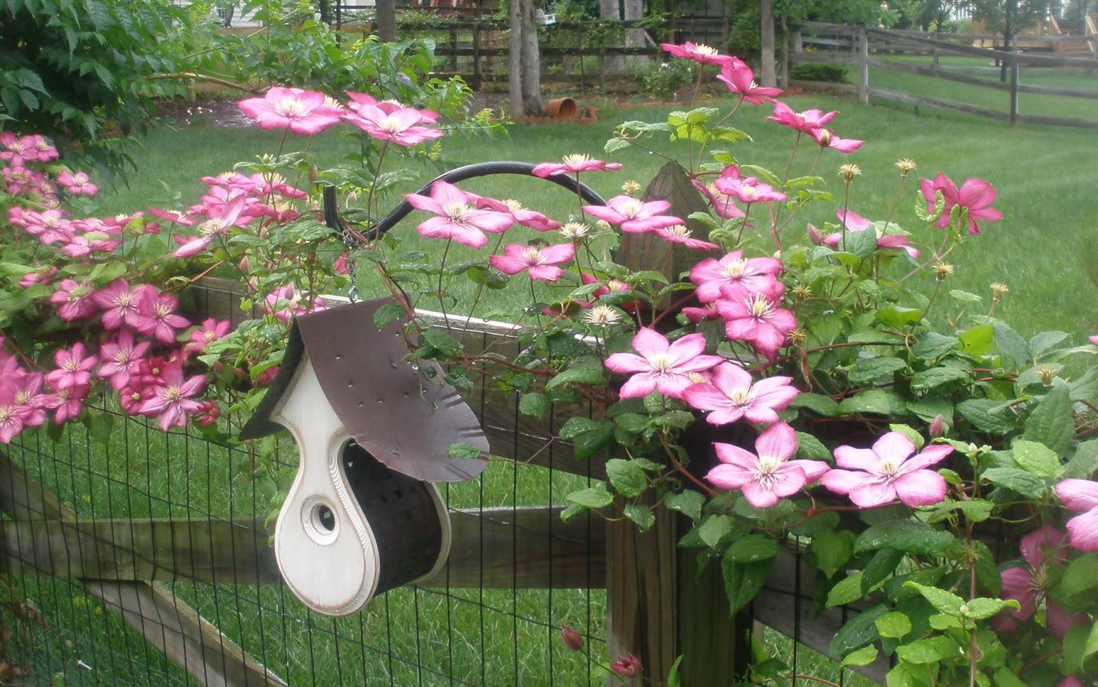 Casa mariposa the rain garden redesign for Redesign my garden
