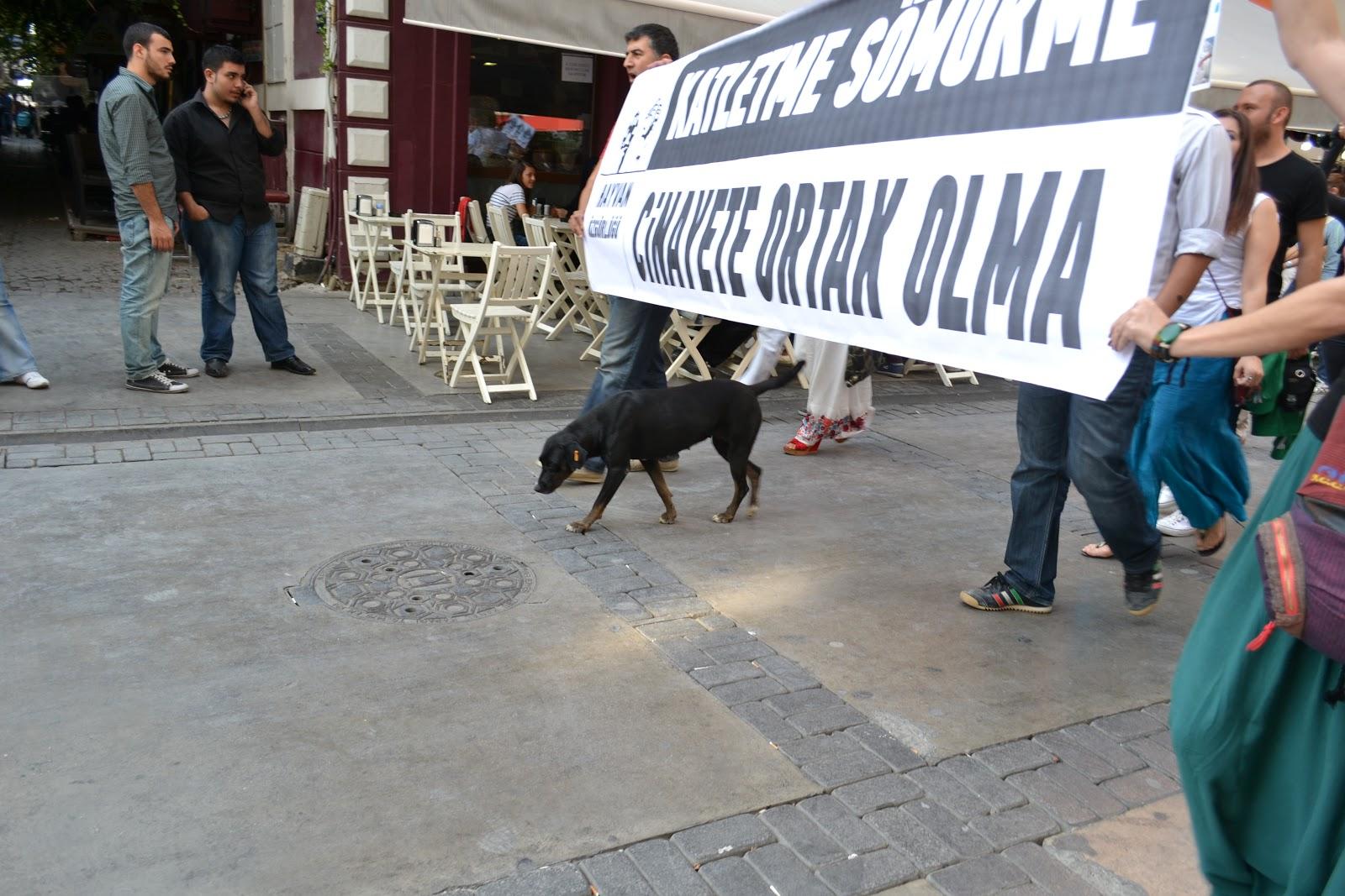 Çavuş Köpek İhmal Kurbanı Mı