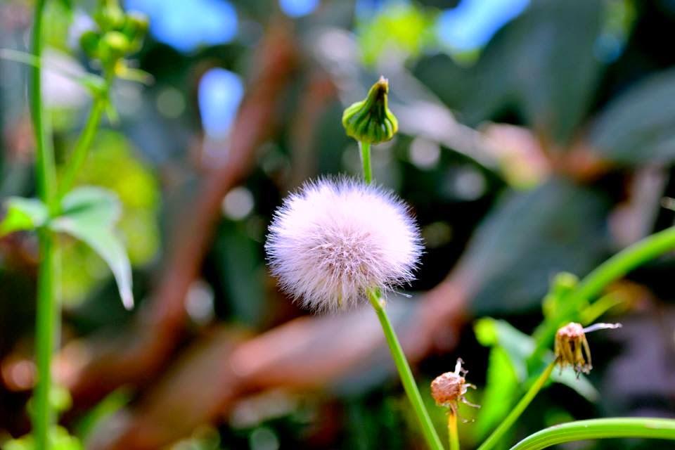 Το λουλούδι των ευχών - Μαρία Κλειδά