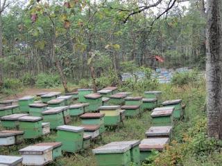 Koloni Lebah Rit Ketiga