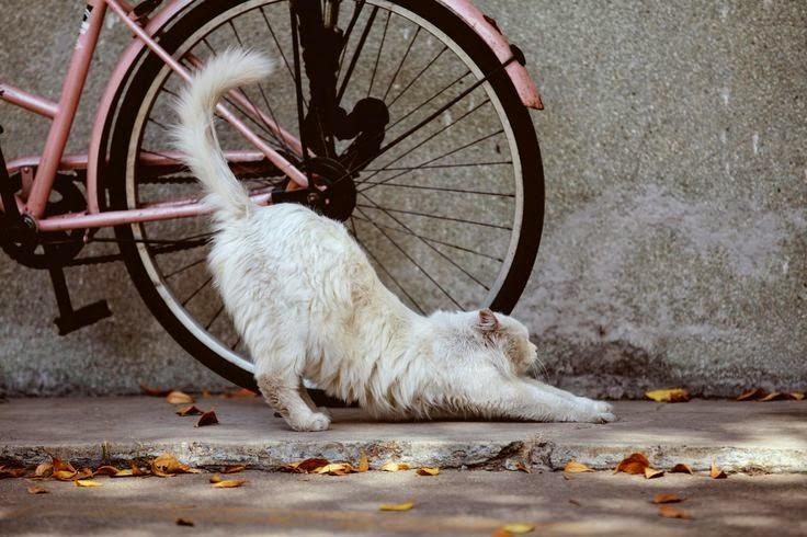 Peregangan ala kucing