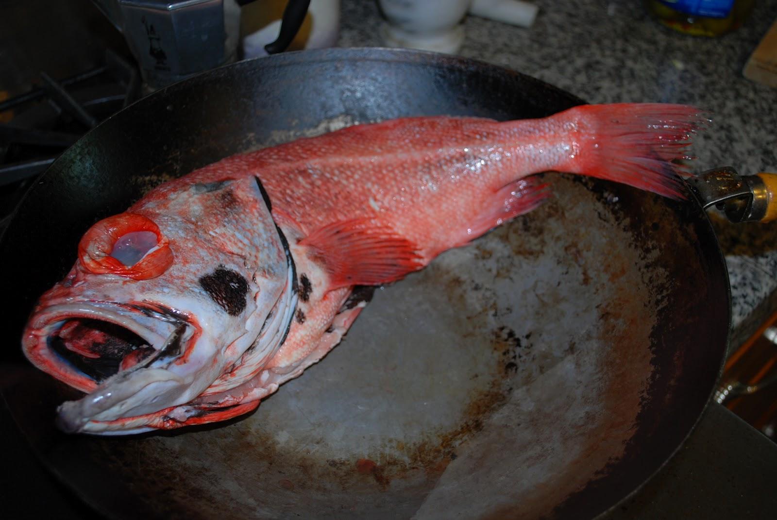 Gumbitarian for Rock cod fish