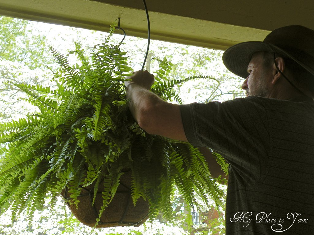 Are Your Hanging Ferns The Envy Of The Neighborhood They