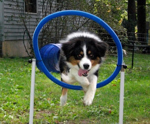Agility Superstar
