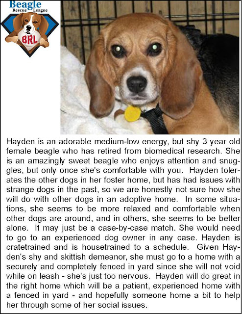 Freckles the Dog Beagle Rescue League