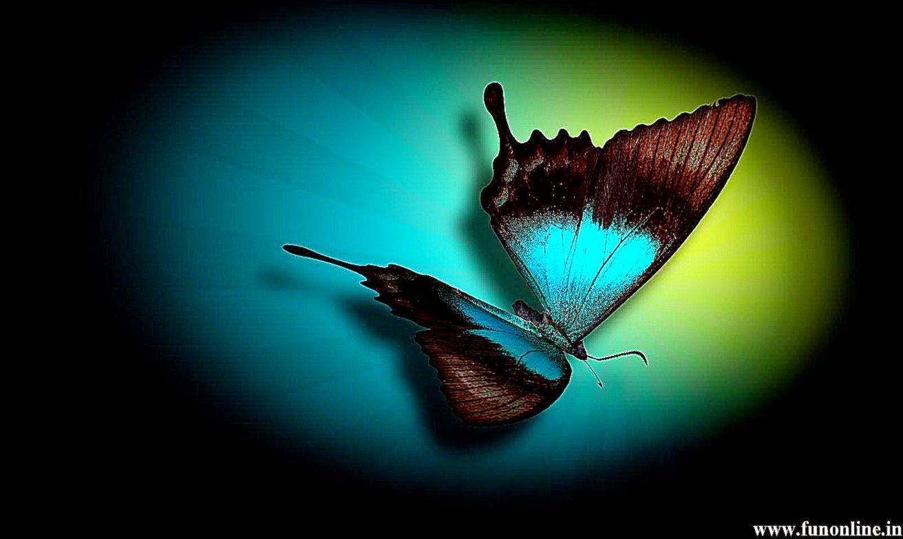 download wallpaper multicolored butterflies - photo #5