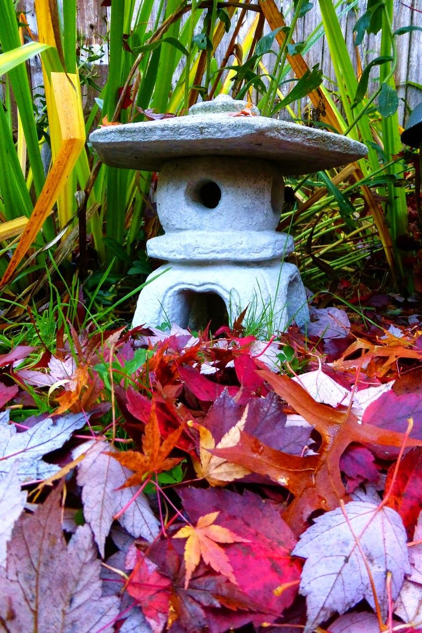 Red maple leaves, japanese maple, autumn, garden, fall, Eugene, oregon, winter