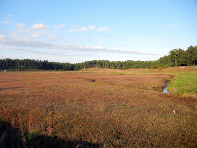 A Massachusetts cranberry bog ready to be harvested